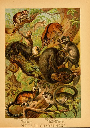 The animal kingdom (Plate III) (6130242394).jpg