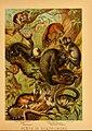 The animal kingdom (Plate III) (6130242394).jpg