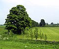 The northern end of Tickton Polo Course - geograph.org.uk - 820820.jpg