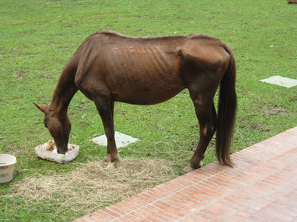 This Horse is in Terrible Shape