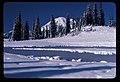 Tipsoo Lake (009437affea7442e890b966c84f03f55).jpg