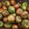 Tomate Ibérico 2017 A1.jpg