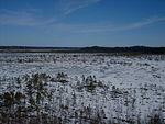 Torronsuon kansallispuisto.jpg