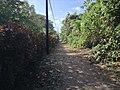 Tortuguero, Limón Province, Costa Rica - panoramio (13).jpg