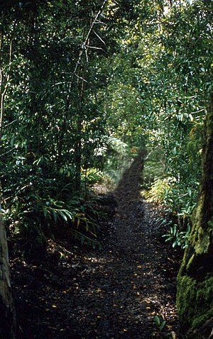 Akaka Falls State Park - Trail in park, 1959