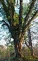 Tree-27527.jpg