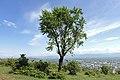 Tree in Georgia.jpg