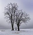Trees with a way side cross along the road close to Lažánky, Czechia.jpg