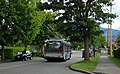 Trolleybus on tree-lined street, Vancouver (Kaslo St).jpg