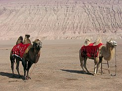 Turpan-flaming-mountains-camellos-d01.jpg