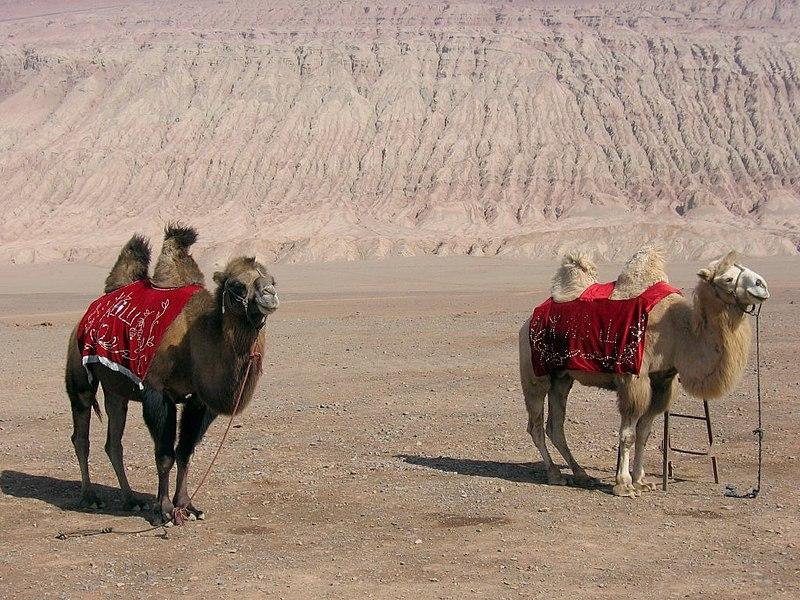 Turpan-flaming-mountains-camellos-d01.jpg