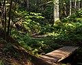 Two footbridges and path in Gullmarsskogen ravine.jpg