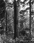 Two men standing next to tall spruce (3491927533).jpg