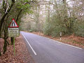 Un-named lane to Emery Down from the A337, New Forest - geograph.org.uk - 93375.jpg