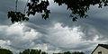 Undulatus asperatus Belgium 9june2014.JPG
