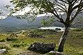 Upper Lake, Killarney National Park, Ring of Kerry (506615) (28137938601).jpg