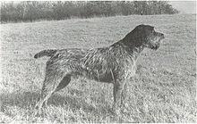 Griffon Dog Names