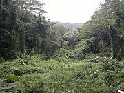 Urwald auf Oahu