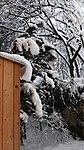 Valentinhaus-Gärten im Winter 07.jpg
