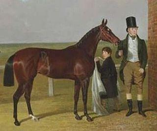 Vespa (horse) British-bred Thoroughbred racehorse