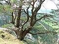 Višňové - panoramio - MilanS (15).jpg