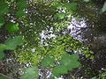 View down to one of the woodland ponds - Tree Top Way - July 2009 - panoramio.jpg