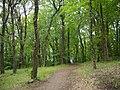 Villandry - château, forêt (03).jpg