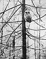 Vogels , bosuil, Bestanddeelnr 194-1272.jpg