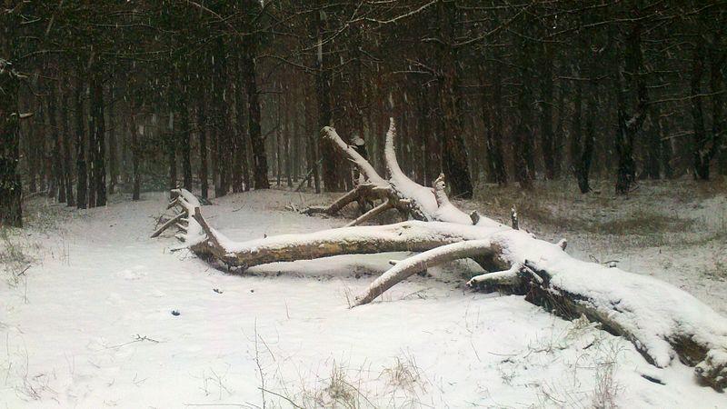 File:Voznesenivskyi district, Zaporizhia, Zaporiz'ka oblast, Ukraine - panoramio (63).jpg