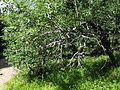 Vylet k Cernemu jezeru Sumava - 9.srpna 2010 71.JPG