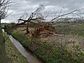 Wageningen after the storm of 18 Januari 2018 - 10.jpg