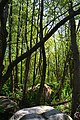 Wald im Landschaftsschutzgebiet Osdorf.jpg