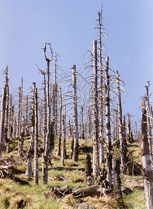 Environmental impact of the petroleum industry - Trees killed by acid rain, an unwanted side effect of burning petroleum