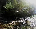 Water Flow Down A River With Light Flowing Through.jpg