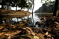 Water bidy in Cambodia.jpg