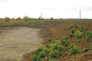 English: Weeds colonising earthworks, Kites Ha...