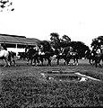 Werner Haberkorn - Prática de equitação 1.jpg