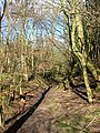 Westenden Wood - geograph.org.uk - 352475.jpg