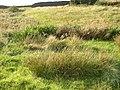 Wet area off Lindley Road, Lindley - geograph.org.uk - 246301.jpg