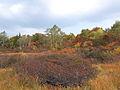 Wetlands Komadome, Aizu, Fukushima Prefecture.jpg