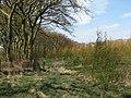 Winnyknowe wood - geograph.org.uk - 160827.jpg
