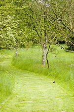 File:Woodland Path @ Hillier Gardens (2479781035).jpg