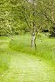 Woodland Path @ Hillier Gardens (2479781035).jpg