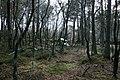 Woodland on Leaf Howe - geograph.org.uk - 761628.jpg
