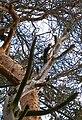 Woodpecker (1252649484).jpg