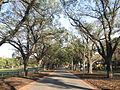 Yarra Park (500966539).jpg