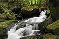 Ysperklamm 2011-05 03 NÖ-Naturdenkmal ME-028.jpg