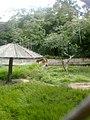 Zoo Dois Irmãos by SandraSB (23).jpg