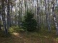 Zubtsovsky District, Tver Oblast, Russia - panoramio (86).jpg