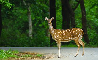 Dandeli - A deer spotted in the wildlife sanctuary